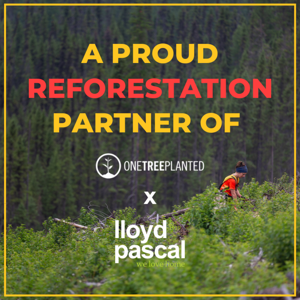 Lloyd Pascal a proud reforestation partner of One Tree Planted, with an image of trees and a person in the background.